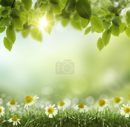 Spring or summer heat abstract .chamomile flower