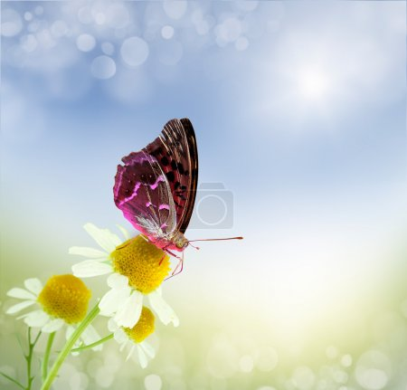 Butterfly and daisy field