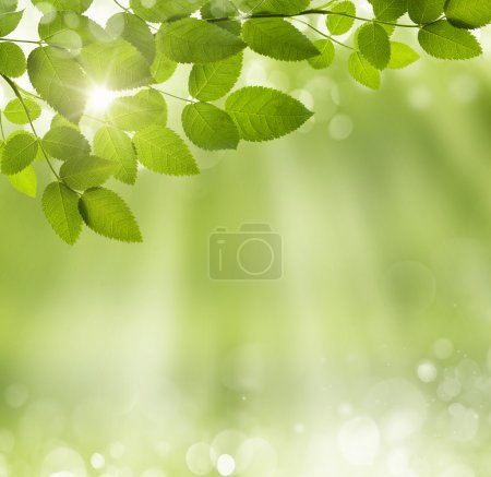 Spring abstract background
