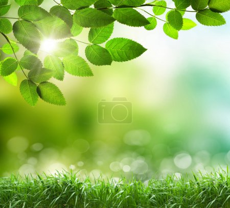Photo for Soft defocused spring background with a sunburst and bokeh over lush green grass - Royalty Free Image