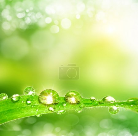 dew drop on a leaf