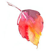 Colorful leaf isolated on white background.