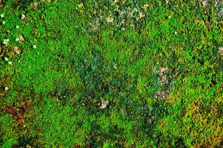 Photo pour La texture de mousse - image libre de droit