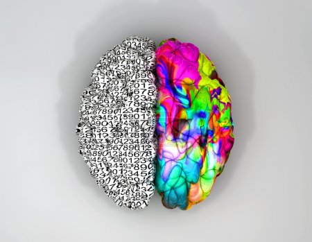 Photo for A typical brain with the left side depicting an analytical, structured and logical mind, and the right side depicting a scattered, creative and colorful side on an isolated background - Royalty Free Image