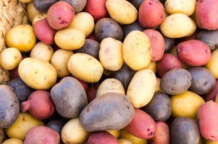 Colorful fresh potatoes on display