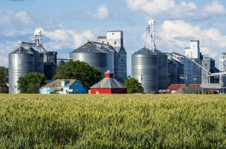 Grain elevators and silos with wheat