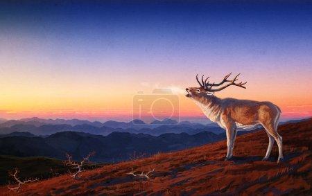 Red deer.