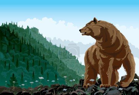 Illustration pour Illustration vectorielle d'un ours . - image libre de droit