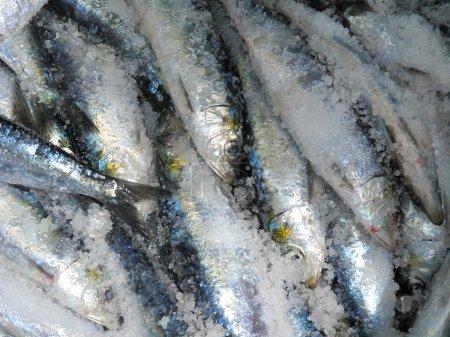 Sardines in salt