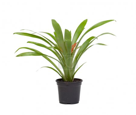 Photo for Pot with a nice plant isolated on white background - Royalty Free Image