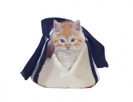 Beautiful red haired cat tucked into its carrying bag