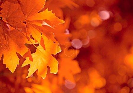 Photo pour Feuilles d'automne, foyer très peu profond - image libre de droit