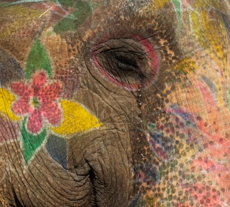 Colourful elephant in Jaipur, Rajasthan, India