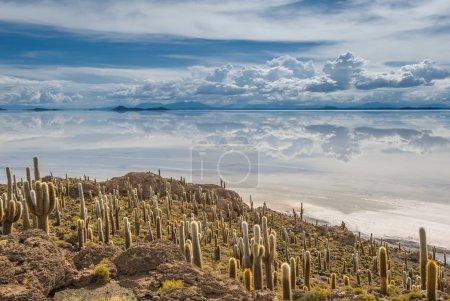 Incahuasi island, Salar de Uyuni, Bolivia...