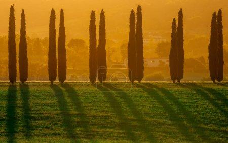 paysage typiquement toscan
