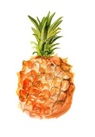 Photo pour Image aquarelle de petit ananas sur fond blanc - image libre de droit