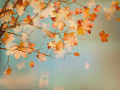 Background with autumn maple leaves EPS 10