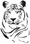 Art animal beauty tiger vector