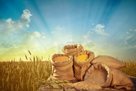 sacks of grain