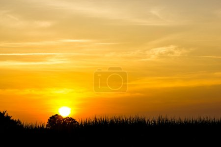 Photo for Sunset - Royalty Free Image
