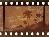 Old palm trees frame the film the film worn