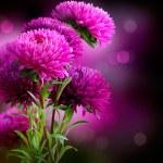 Aster Autumn Flowers Art Design...
