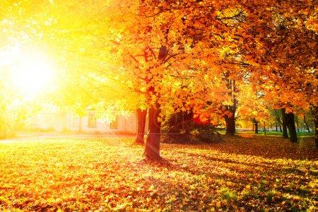 Photo pour Tomber. Autumnal Park. Feuilles et arbres d'automne - image libre de droit