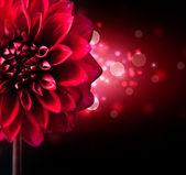 Dahlia květinovým vzorem na černém pozadí