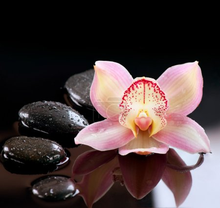 Zen Stones and Orchid Flower. Stone Massage