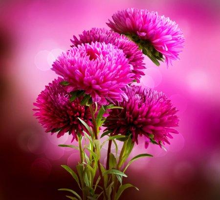 Aster Flowers Bouquet Art Design...