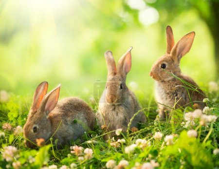 Photo for Rabbits. Art Design of Cute Little Easter Bunnies in the Meadow - Royalty Free Image
