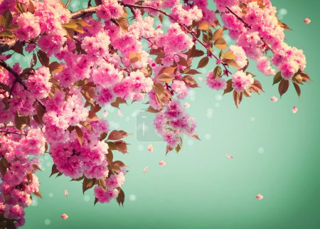 Photo for Sakura Flowers Background art Design. Spring Sacura Blossom - Royalty Free Image