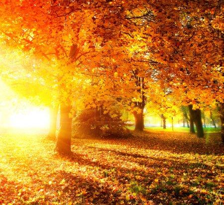 Photo pour Tomber. Autumnal Park. Arbres et feuilles d'automne dans les rayons de lumière du soleil - image libre de droit