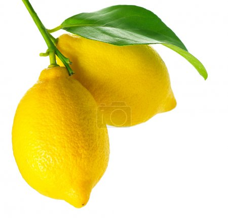 Photo for Lemon isolated on White. Fresh and Ripe Lemons - Royalty Free Image