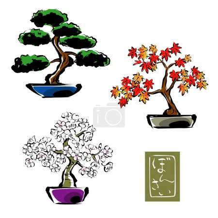 Illustration for Bonsai pinetree, japanese maple,sakura, cherry blossom - Royalty Free Image
