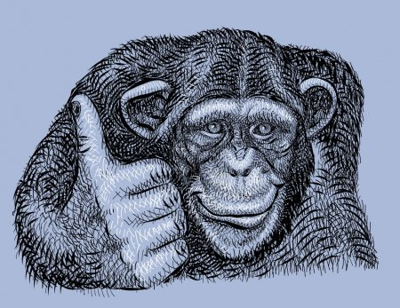 Illustration for Chimpanzee drawing with combination lines. Use for any design you want. - Royalty Free Image