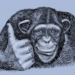 Chimpanzee drawing with combination lines. Use for...