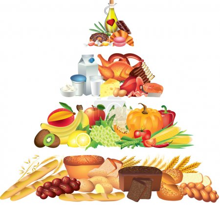 Photo for Food pyramid photo-realistic illustration - Royalty Free Image