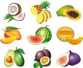 Exotic fruits photo-realistic set