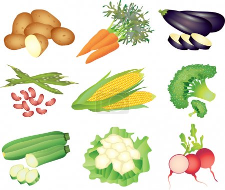 Vegetables photo-realistic set