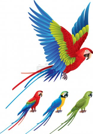 Illustration for Macaw parrot spread wings and tree colorful sitting Aras photo realistic vector - Royalty Free Image