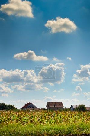 Photo pour Nuages et champ de maïs - image libre de droit