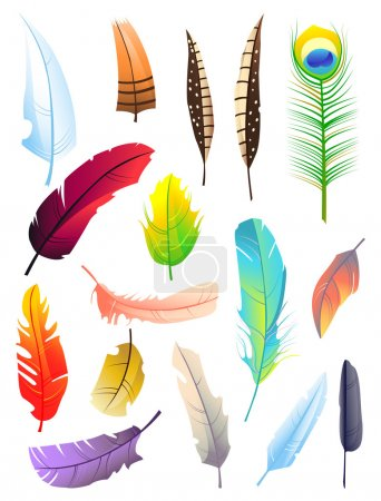 Illustration for Set of bird colored feathers isolated on white background. Beautiful elements for decoration - Royalty Free Image