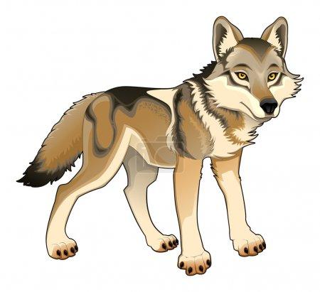 Illustration pour Le loup. Vecteur et personnage isolé de bande dessinée - image libre de droit