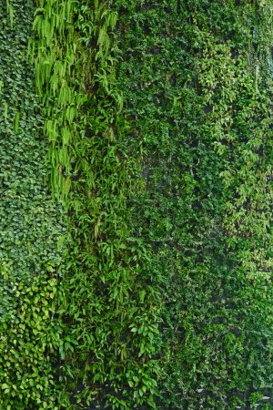 Vertical garden natural green leaf texture...