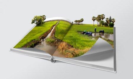Photo pour Livre ouvert dans les rizières vertes - image libre de droit