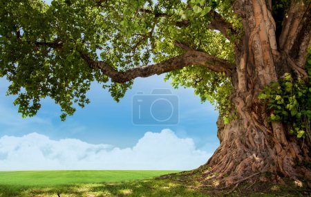 Photo for Green tree nature landscape - Royalty Free Image