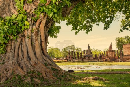 Braided roots of large banyan tree in Sukhothai Historical Park, Thailand