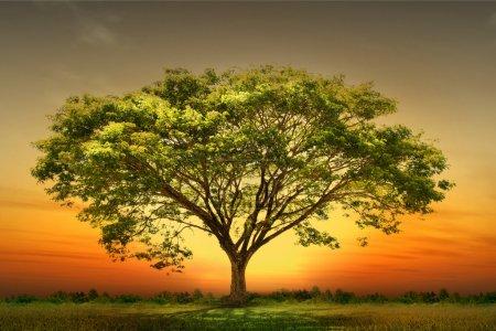 Photo pour Arbre vert nature paysage - image libre de droit