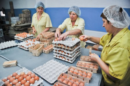Photo for Egg chicken farm, packing lines - Royalty Free Image